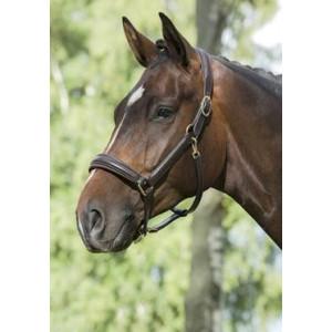 Grimma Mountain Horse